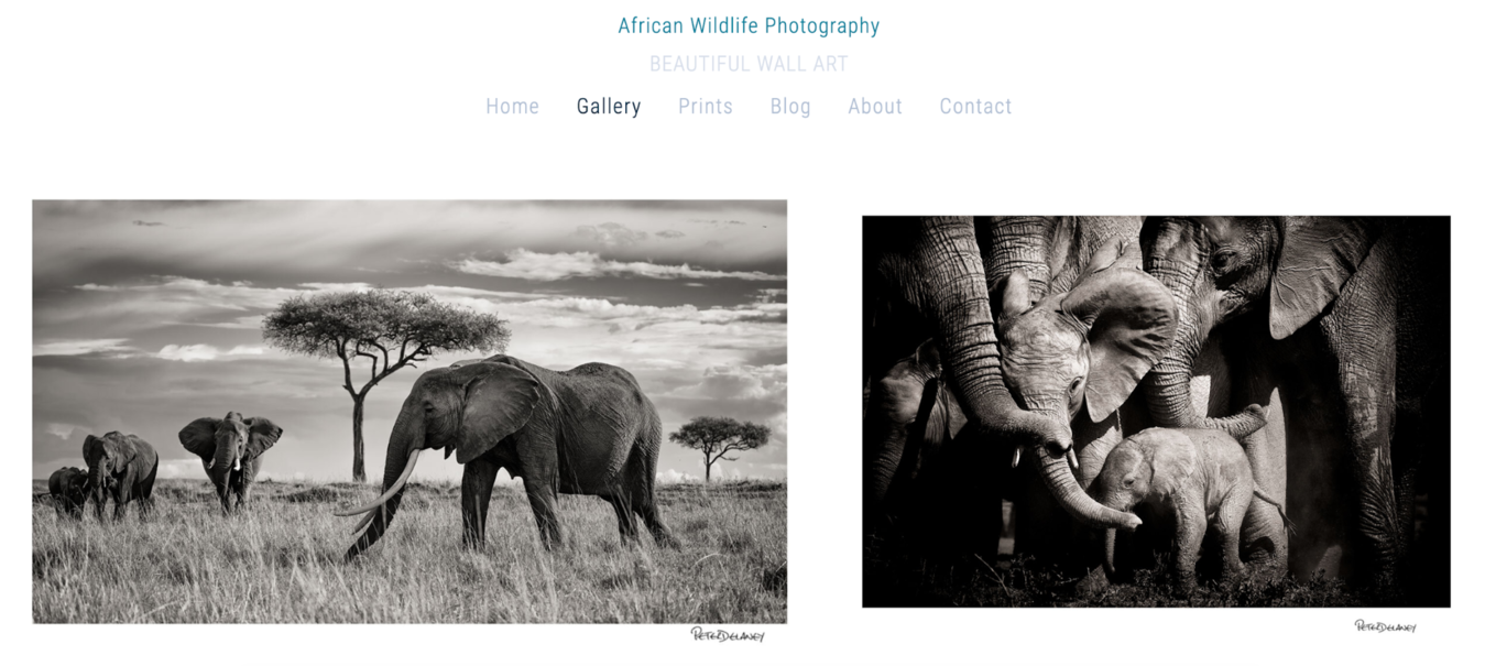 Peter Delaney Photography blog with black and white photos of elephants