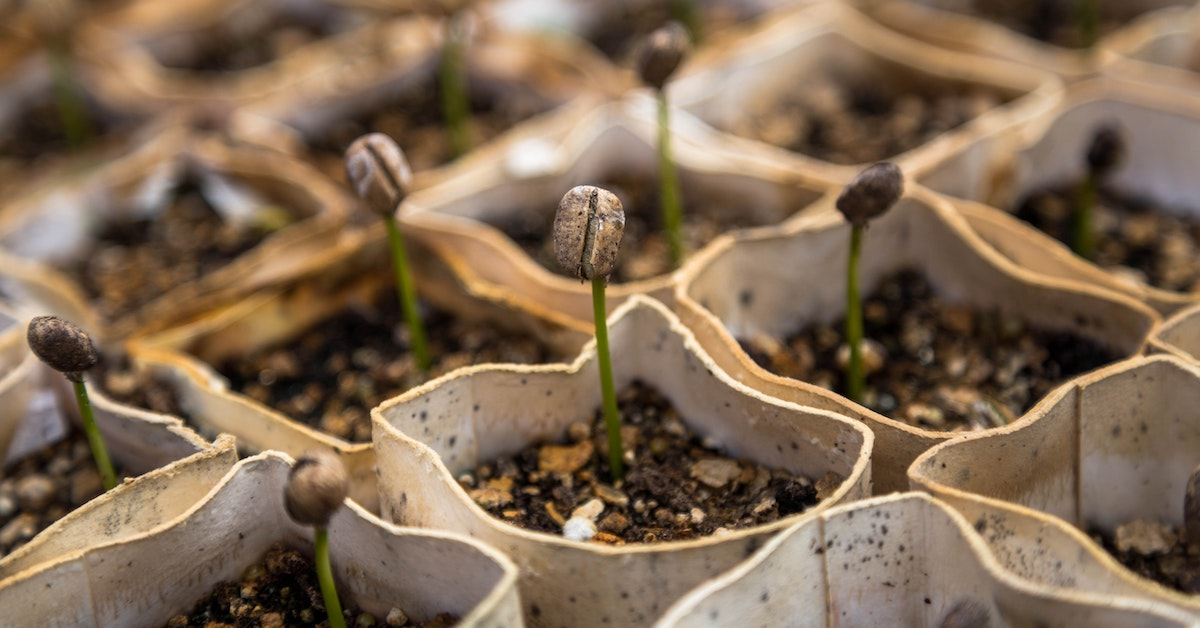 vegetable garden seed products growing
