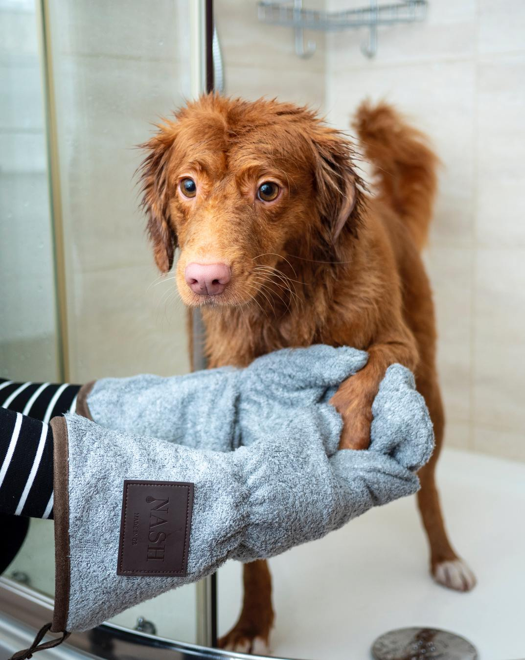 Um cão a ser lavado e seco