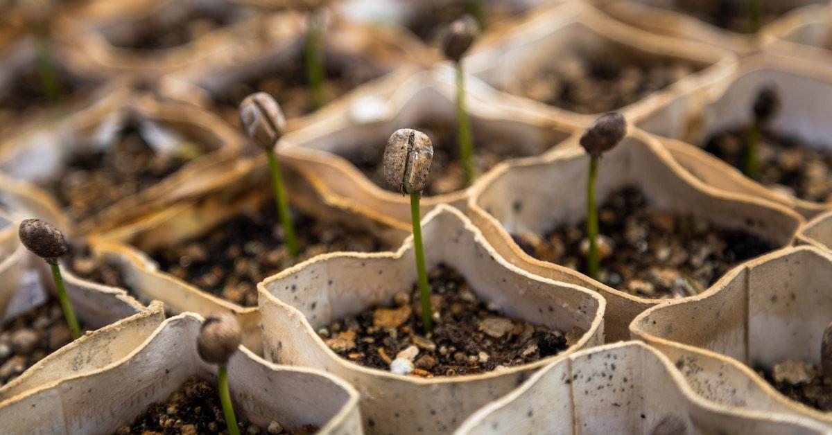 sementes de vegetais a crescer