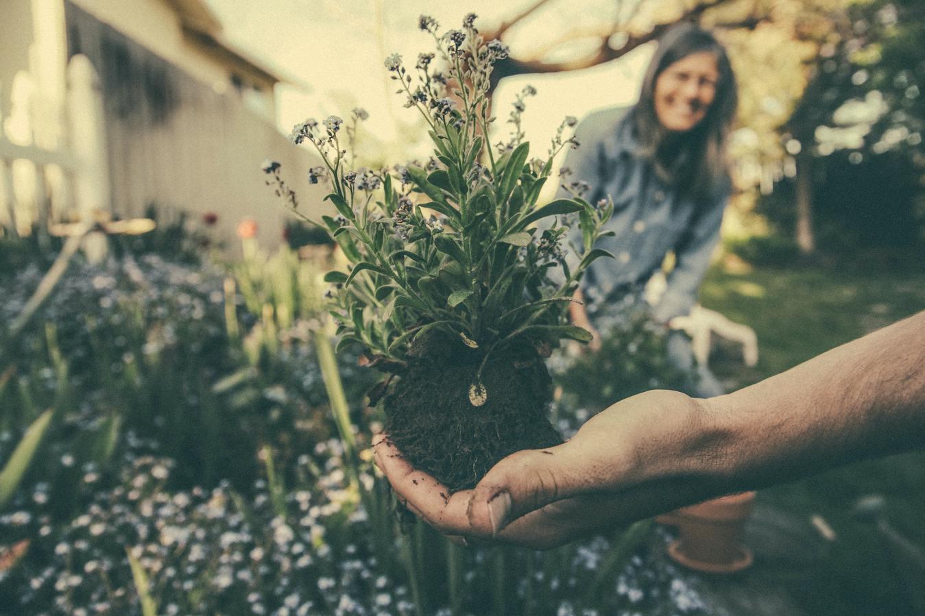 Een hand die een bloem in een tuin vasthoudt