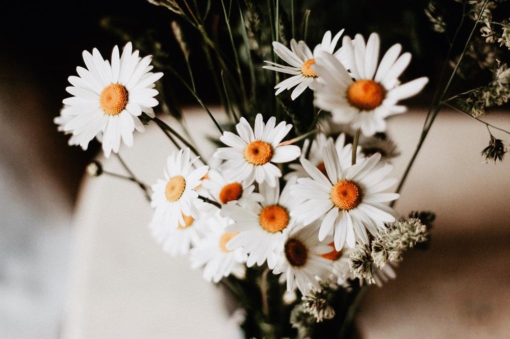 Strauß Gänseblümchen in einer Vase