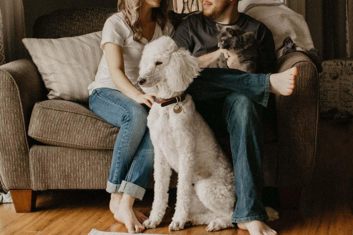 Pies i kot z właścicielami siedzącymi na kanapie