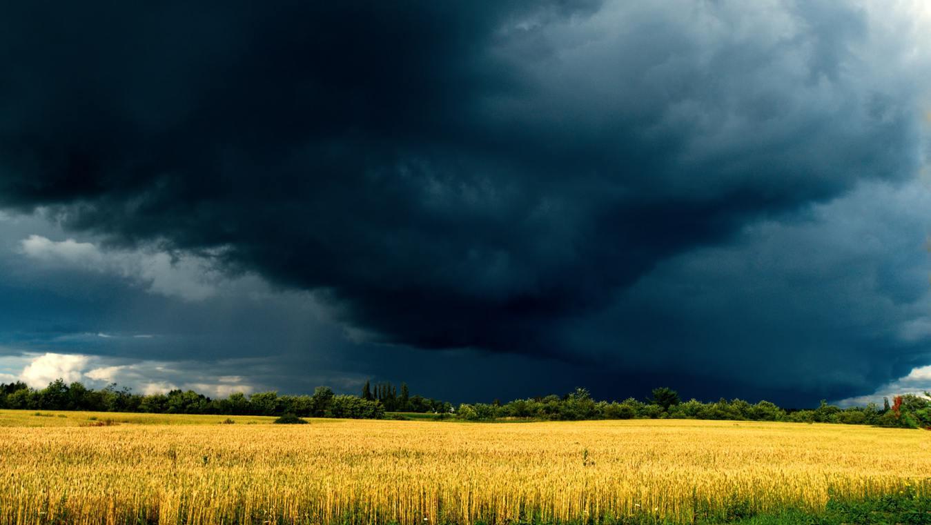 Dreigende onweerswolken gele velden op de voorgrond