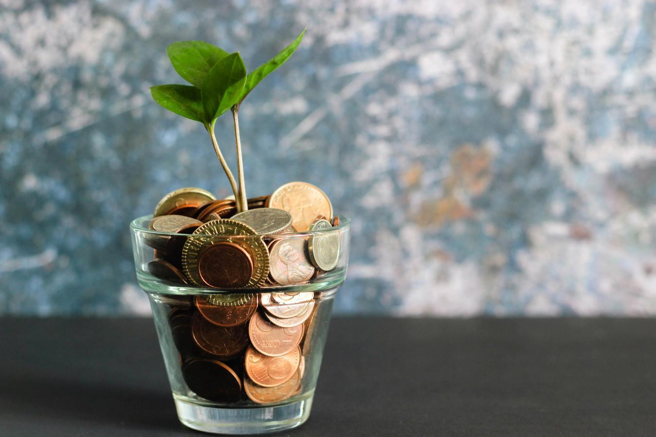 Une plante qui pousse dans un verre avec de l'argent