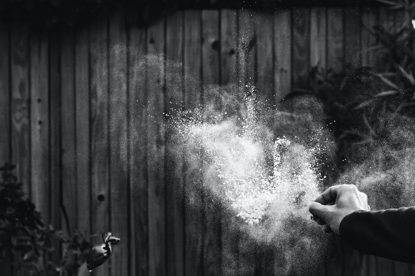 Black and white photography experiment with powder