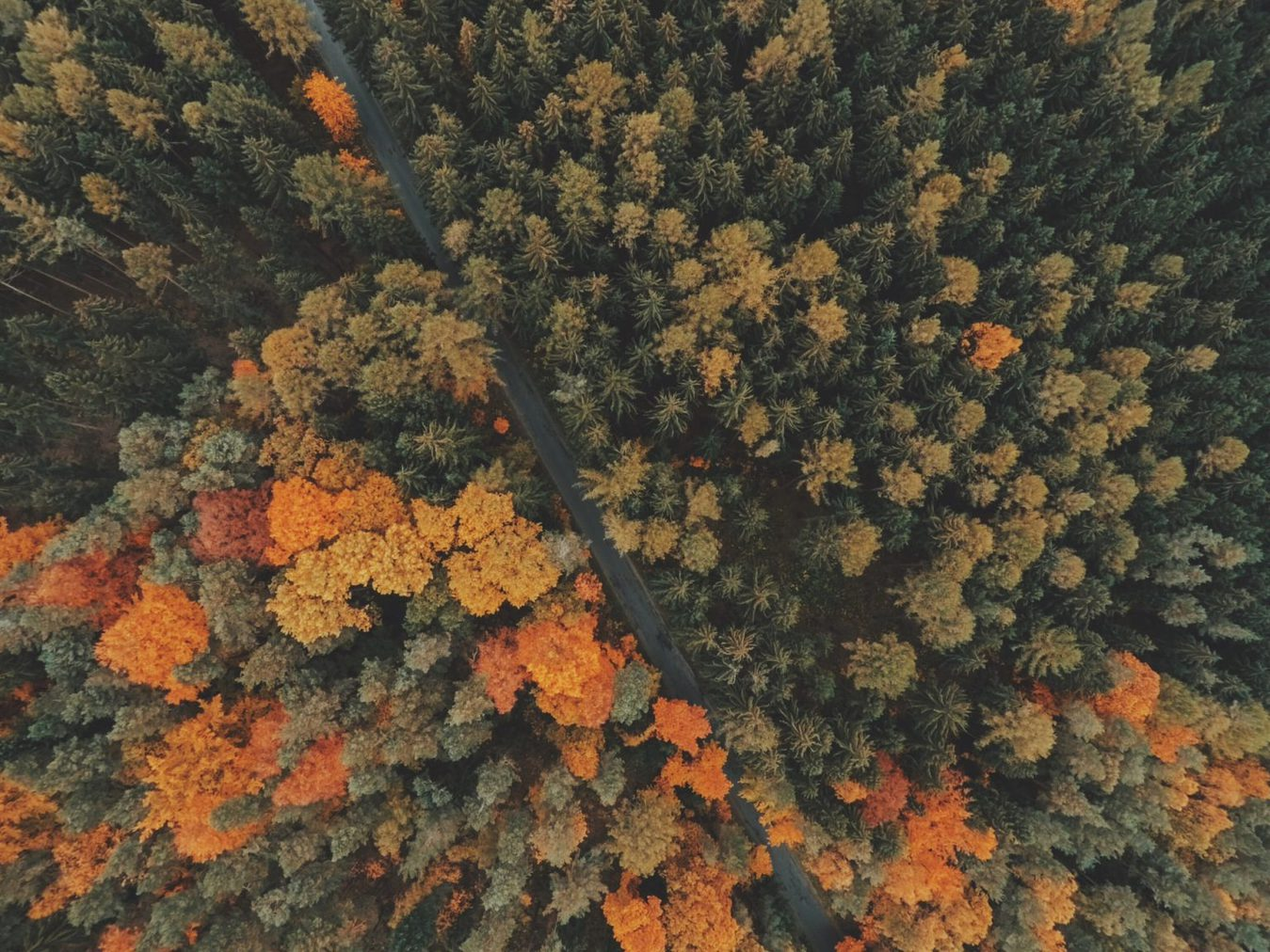 Autumn forest colors - top view